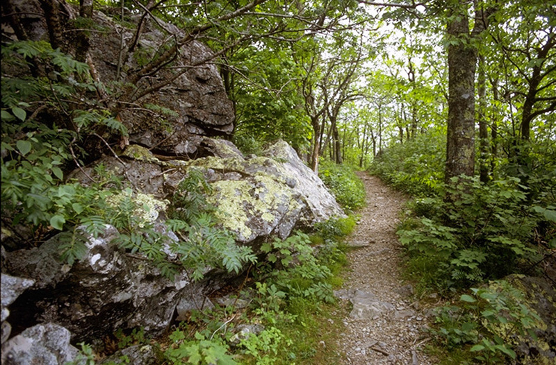 Photo of Trail in Shenandoah National Park