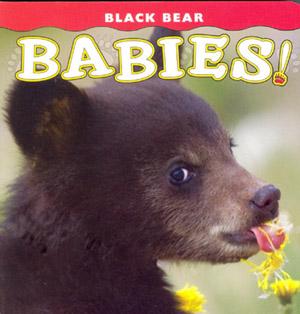 Photo of Black Bear Babies!