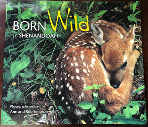 Photo of Born Wild in Shenandoah